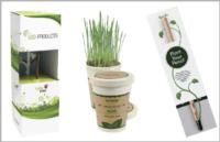 Plantas para regalos corporativos